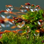 Природа, красота, благодарность